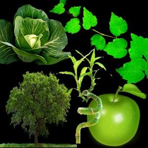 zelena boja