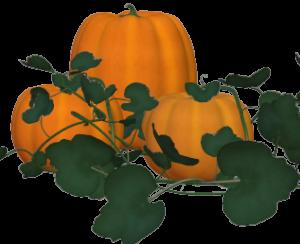 pumpkins2m