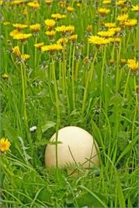 Skidanje uroka jajetom