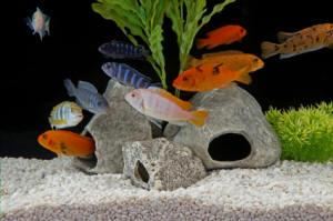 FishTanks