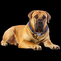 sagittdog