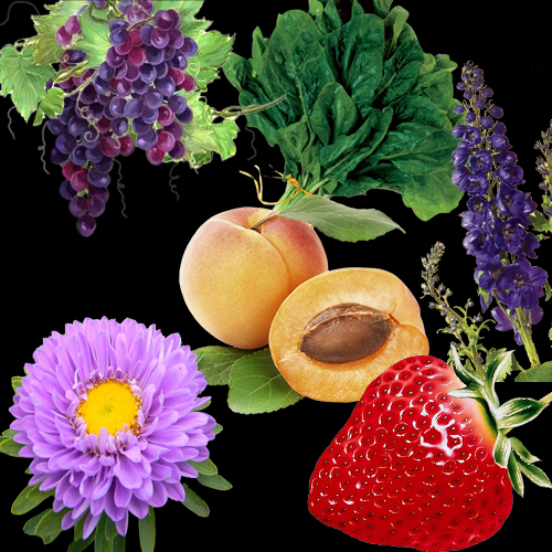 taurusplants